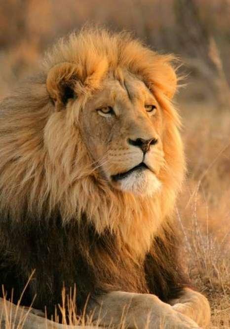 Populaire Audacieux comme un lion - Reinhard Bonnke - EnseigneMoi OJ92