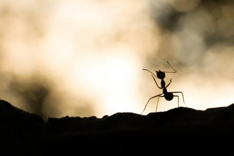 La sagesse de la fourmi : preuve du zèle