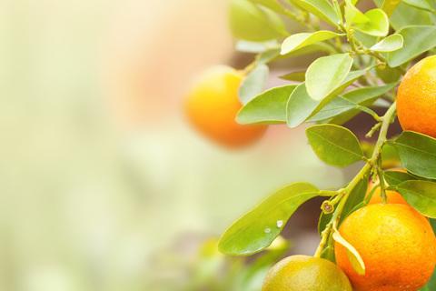 Être émondé pour porter plus de fruits